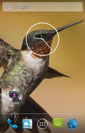 Hummingbird Live Wallpapers