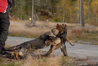 Photo: Ayla og Ailo løper etter pinne