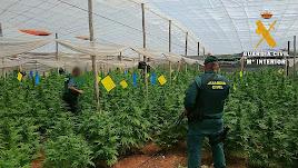 Agentes en uno de los invernaderos con marihuana.
