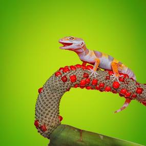 by Andri Priyadi - Animals Reptiles