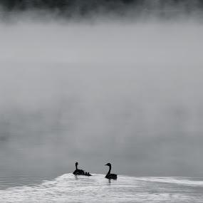 by Antonio Tavoletti - Animals Birds