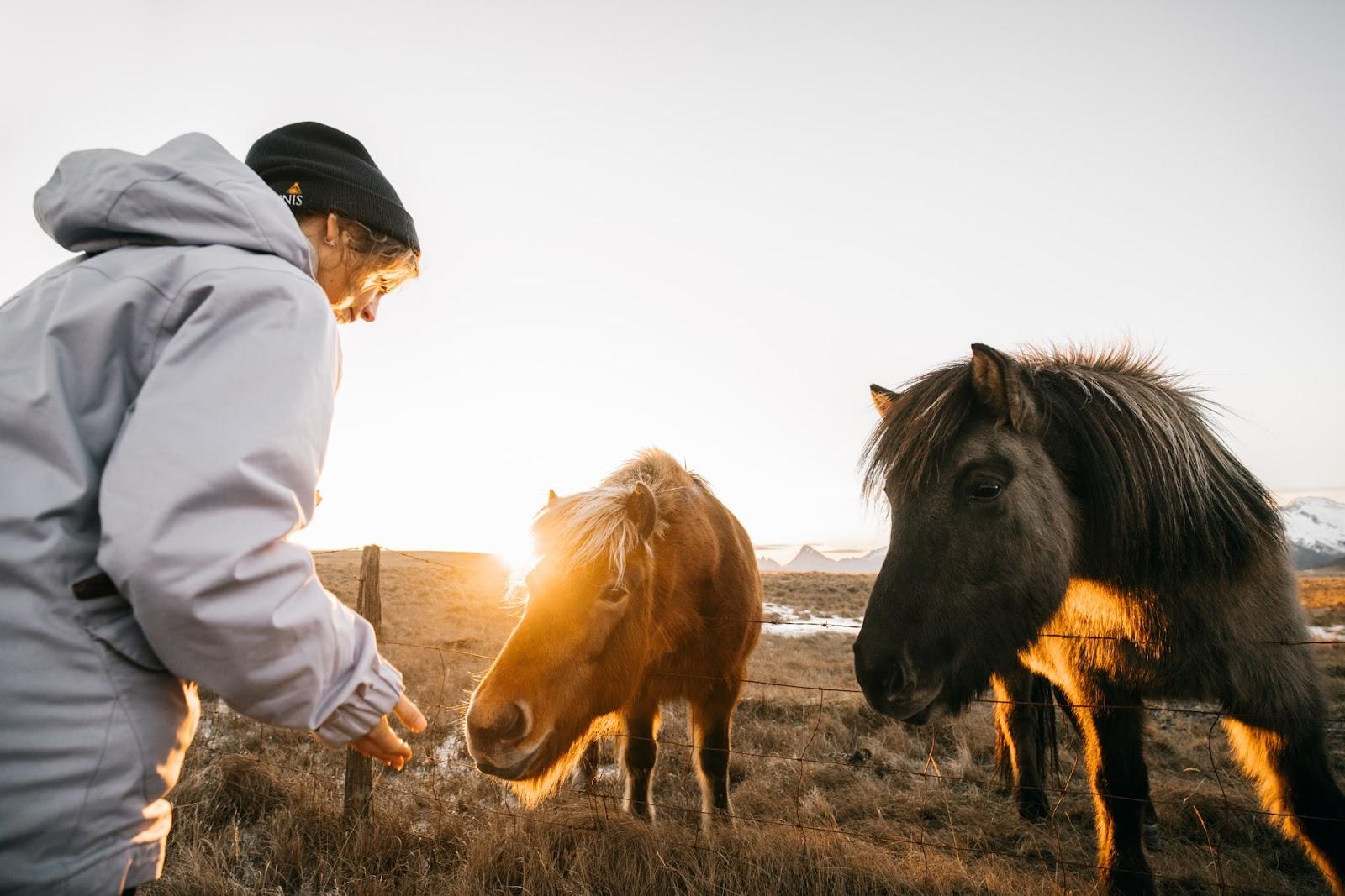 Girl feeding 2 horses