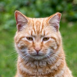 by Waldemar Dorhoi - Animals - Cats Portraits
