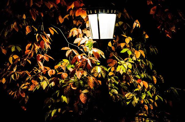 Leaves at night di ANNALISA POMPONI