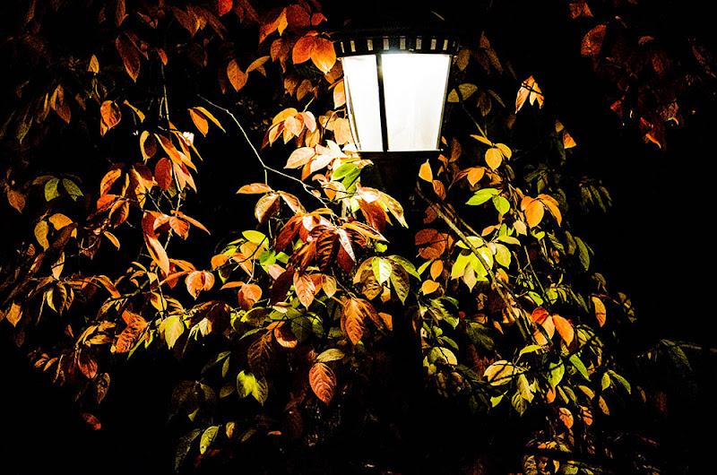 Leaves at night di ANNALISA POMPONI