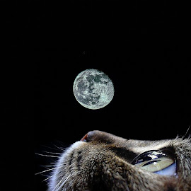 moon!! by Gjunior Photographer - Digital Art Animals ( digital art )