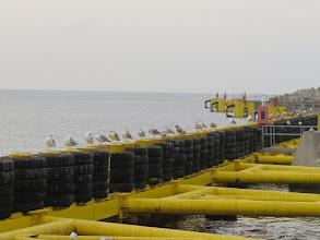 Photo: F1193343 Kolobrzeg - port