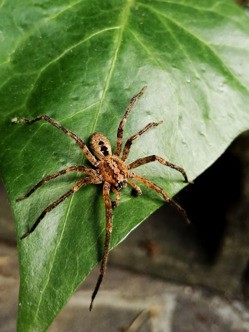 Arachnophobic di Elisa25