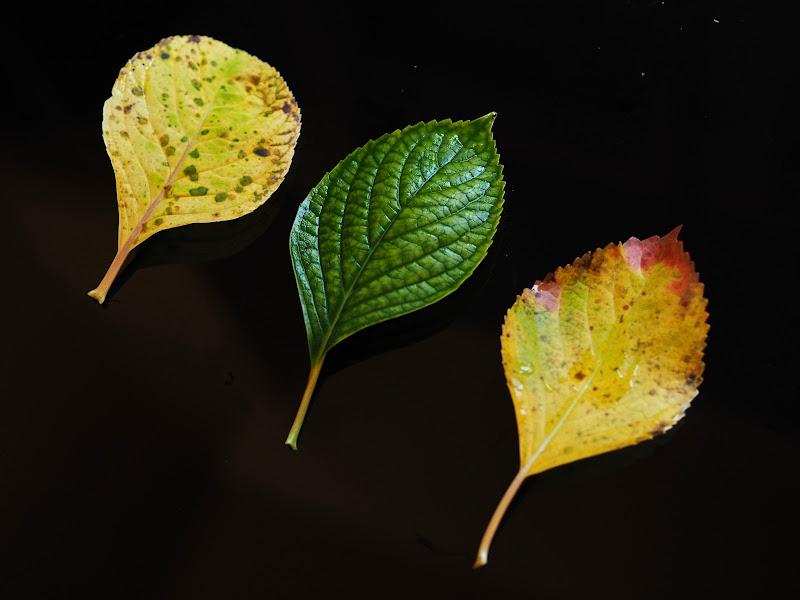 Falling leaves di Mcmelon