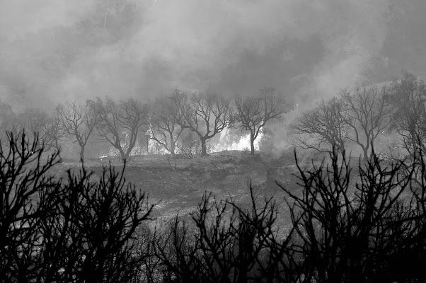 natura in bianco e molto nero...nell'incendio di tomaso melis