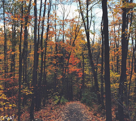 trees in autumn di Felisiana