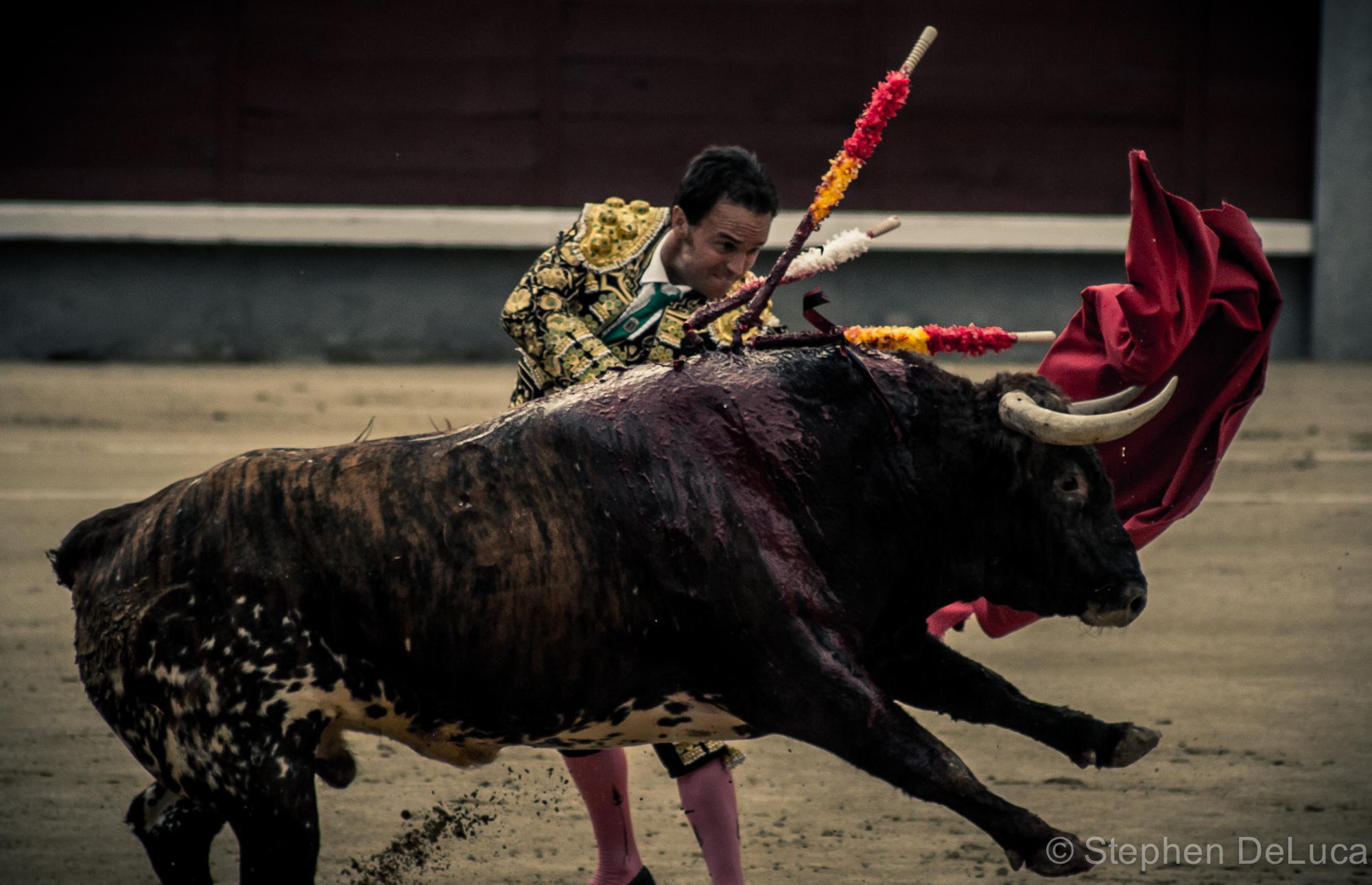 Photo: Bullfight