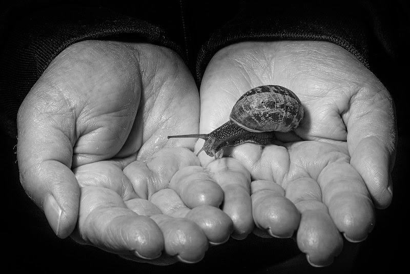 Con le mani, se vuoi, puoi dirmi di si... di Sergio Locatelli