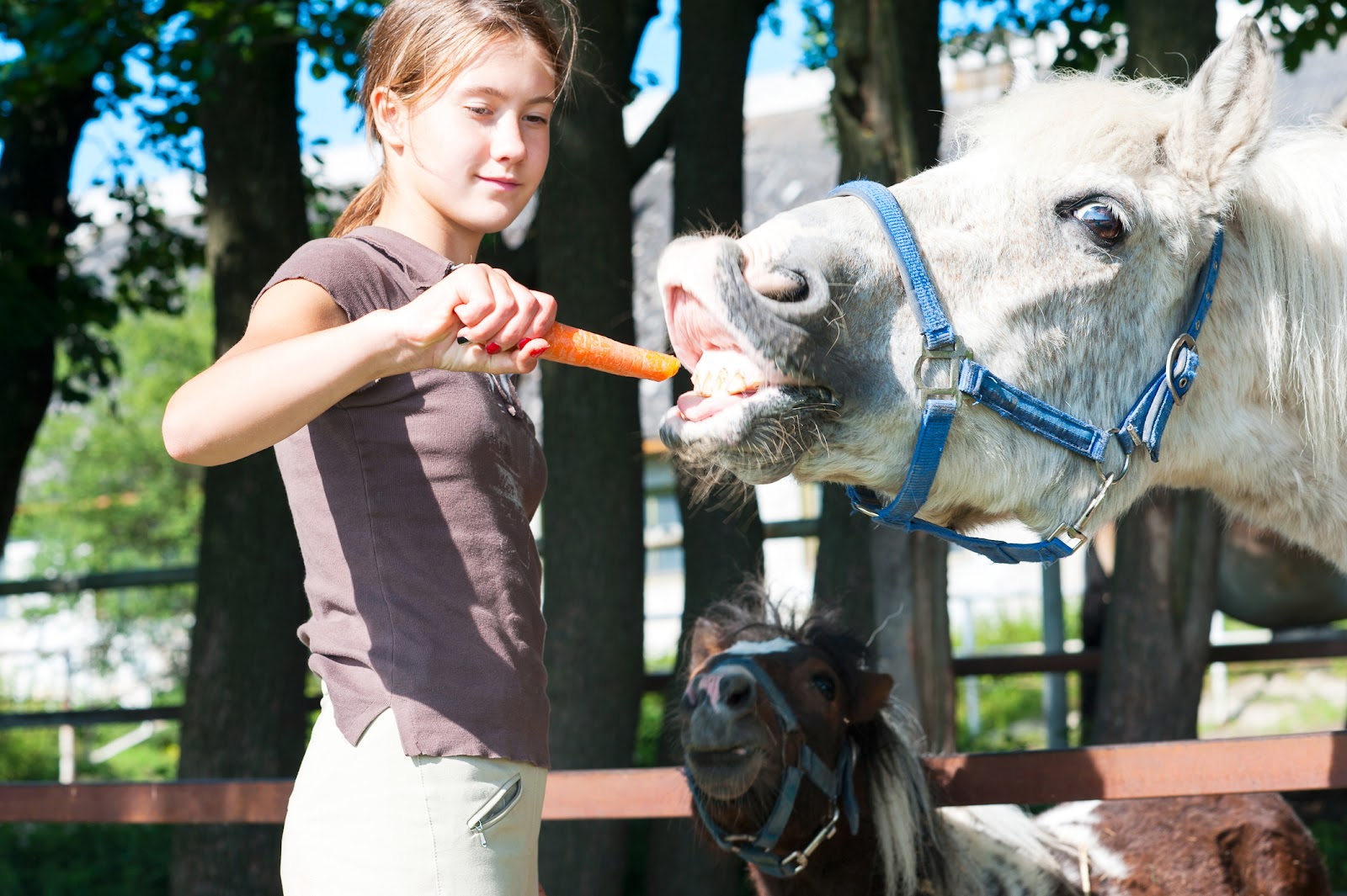 Teen girl feeding horse during equine therapy.