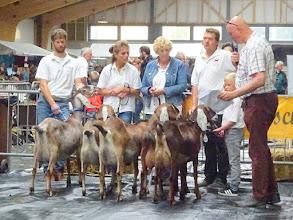Photo: Rubriek 4: Nubische geiten geboren in 2014. 1a. Isa Bella van Oudwoude KI; 1b. Sunshine Joyce; 1c. Sunshine Sharon; 1d. Happy van Stal Suijden; 2a. Sunshine Nicole.
