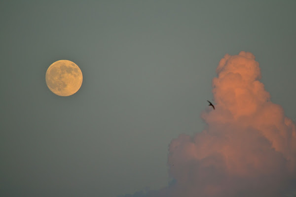 luna, nuvola e rondine di marcorossi
