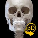 Skeleton   3D Anatomy icon
