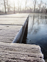 Photo: Crystal frost dock on a cool morning at Eastwood Park in Dayton, Ohio.