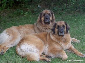 Photo: 2005 - Elli vorn, Enzo hinten, er ist 2011 gestorben