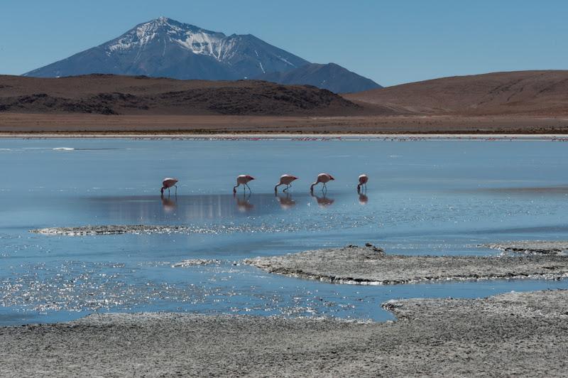 Lagune Boliviane di laurafacchini
