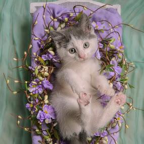 Wiscar 8 by Anita Meis - Animals - Cats Kittens ( kitten, shoot, cute, newborn )