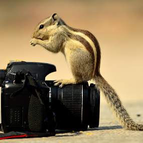 Now try to click me by Manoj Kulkarni - Animals Other ( nature, camera, squirrel,  )