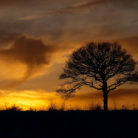 Hello old friend by Mark Denham - Landscapes Prairies, Meadows & Fields