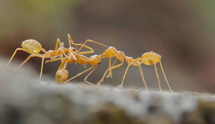 Fight by Aditya Sanjaya Ganap - Animals Insects & Spiders