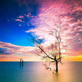 ... holding the sky by Keris Tuah - Nature Up Close Trees & Bushes