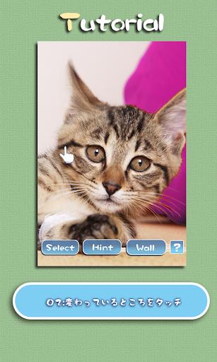 Aha-Experience Scenes of Cats 1.1 Windows u7528 2