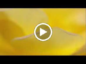 Video: Antonio Vivaldi  Dixit Dominus [psalm 109] in D major (RV 594) - Part I -