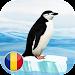 Pinguini icon