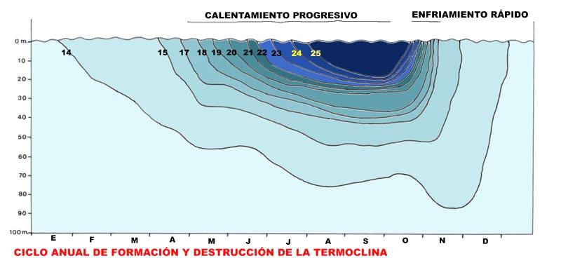 Aparición y desaparición de la termoclina en nuestras aguas(Imagen 5) [Litoral sumergido]. Cristina Eisman