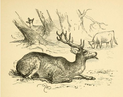 The sick stag and apathetic animals