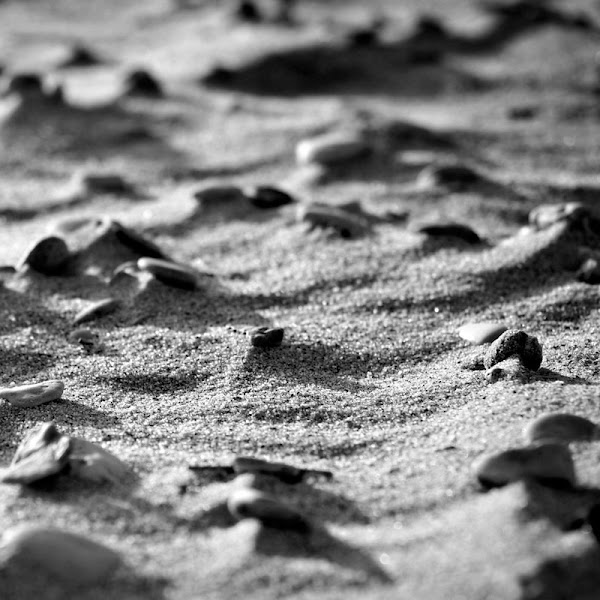 Photo: Day 117 +G+ 365 Project : 26 April 2012 Beach, Red Sea, Egypt  It's the weekend!! Back to the beach. Fresh air. Out of the City!!!!!!  #redsea #egypt #BlackandWhite this week's #365weeklytheme #365project