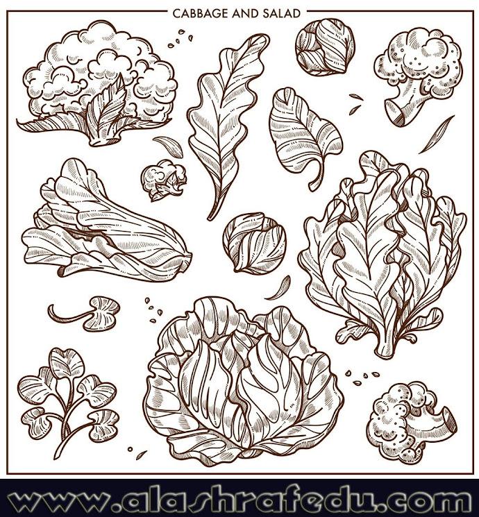 Salad Lettuce Cabbages Vegetables Lxd4HKi3dcD9u9iFxm4x