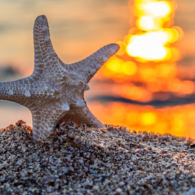 beautiful starfish in sunrise by Grigor  Ivanov - Landscapes Beaches ( the scenery, old, concept, relax, tropical, retro, ocean, travel, beach, yellow, landscape, sun, coast, island, sky, nature, sunny, sunshine, surf, water, sand, desert, vintage, dream, starfish, wallpaper, white, star, sea, horizon, sunlight, paradise, field, vacation, outdoor, peace, background, summer, scene, beam, day, sunrise, natural, tour tourism )
