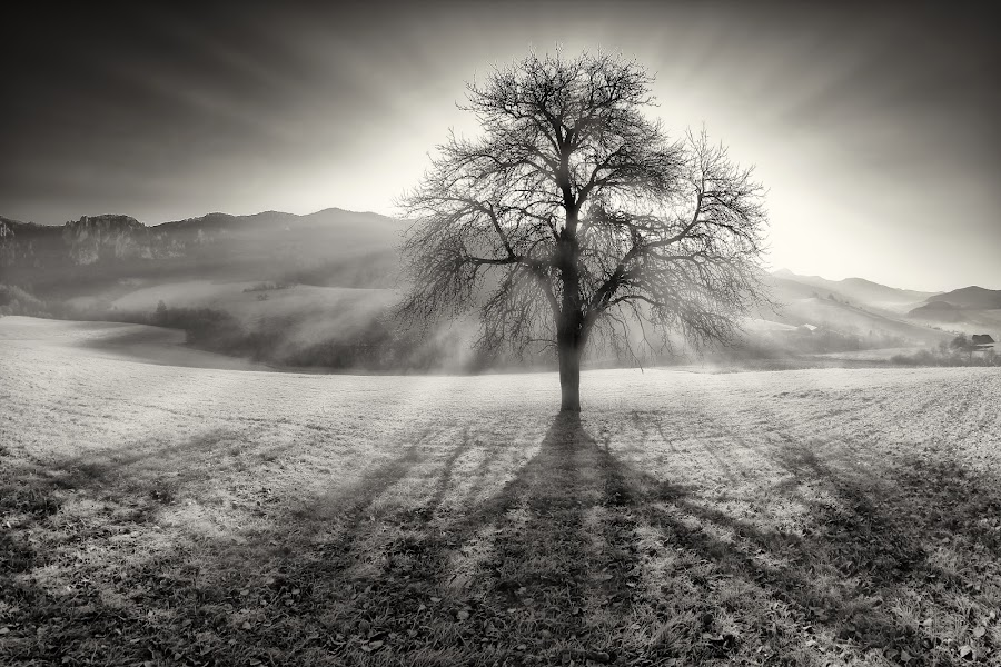 sacred Tree by Matej Kováč - Black & White Landscapes ( mono-tone, b&w, black and white, black and white collection, b and w, monotone, landscape, garyfonglandscapes, holiday photo contest, photocontest,  )