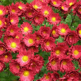 by Jana Kubínová - Flowers Flower Arangements