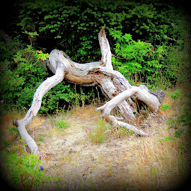 Face Plant by Becky Luschei - Artistic Objects Still Life ( gnarled, tree trunk, face plant, hike, branches )