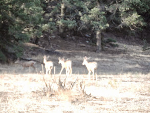Photo: Black-tailed deer pointing the way up the hill.