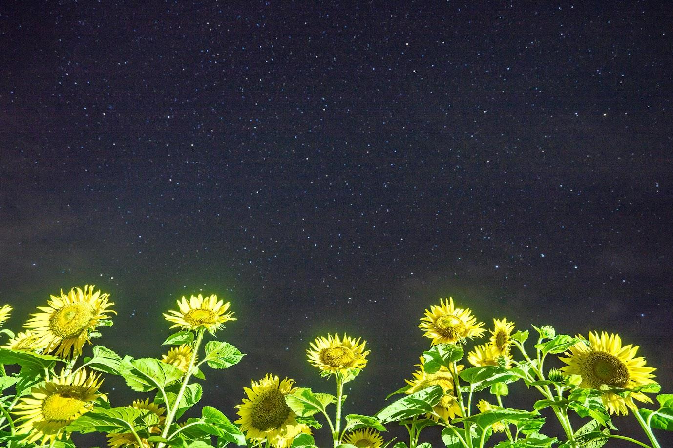 見上げてごらん〜満天の星を〜 🎶