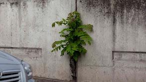 Colonizing Plants thumbnail