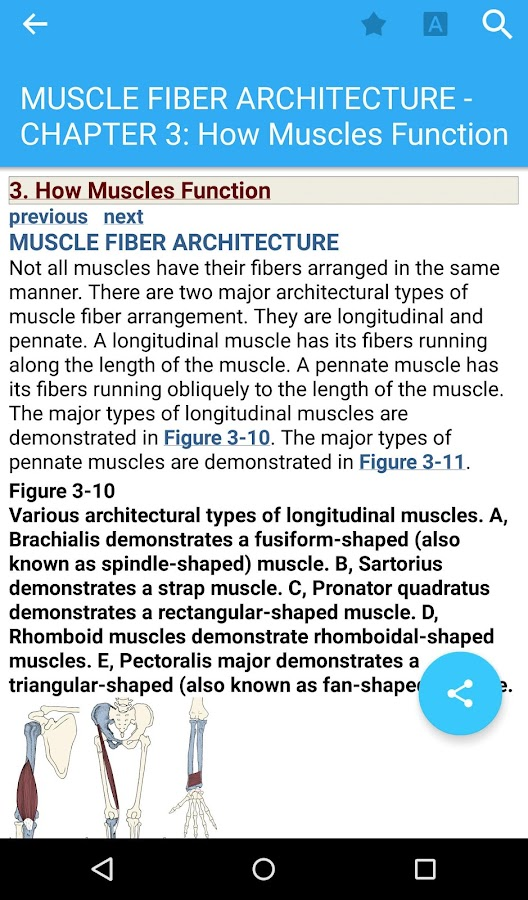 Musculoskeletal Anatomy Coloring Book By Joseph E Muscolino : The muscular system manual android apps on google play