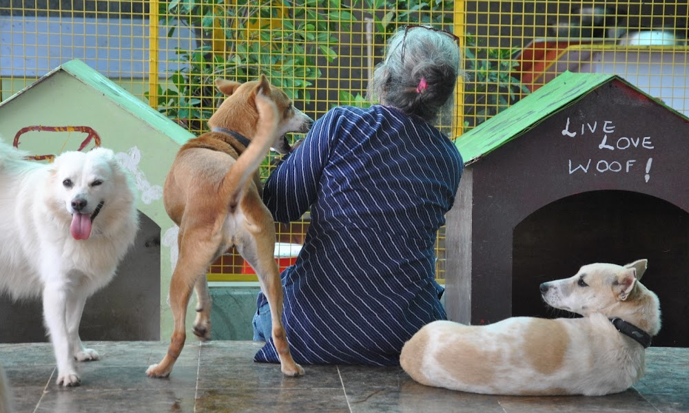 christmas-on-a-budget-bangalore_charlies_animal_rescue_centre