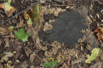 Photo: Fungus and Stump