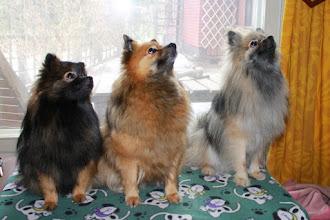 Photo: Tytti, Kira ja Nalle