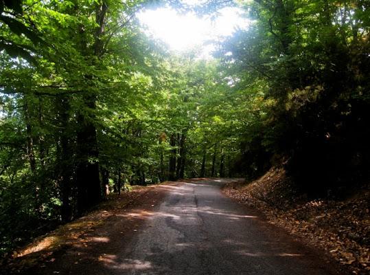 La Vita,un lungo viale alberato con tant di PGiannelli96