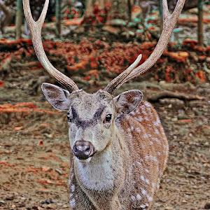 Pixoto Deer 1.jpg