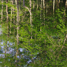 Not Upside Down by Kirk Barnes - Landscapes Forests ( green, reflection, water, trees,  )